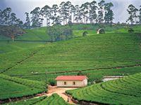 ヌワナエリア/緑の絨毯