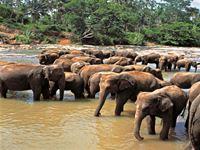 象の水浴び/イメージ