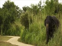 エレファントコリドールホテル/野生の象