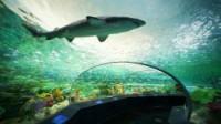*リプリー水族館 写真提供:オンタリオ州観光局
