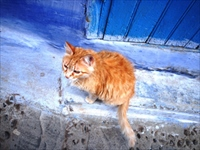 シャウエンの猫/イメージ