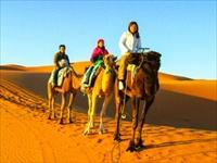 サハラ砂漠 ラクダ体験