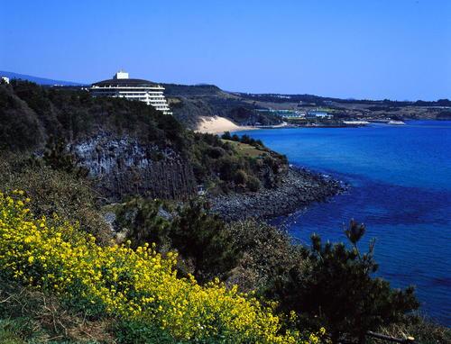 済州島 海