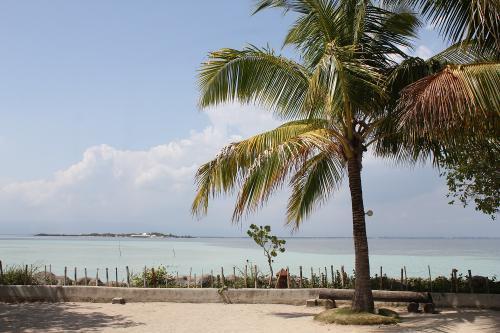 ココヤシと海