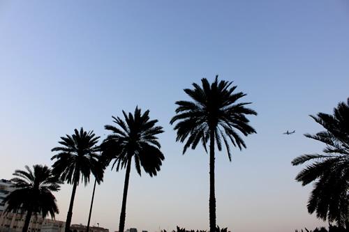 椰子の木の向こうに飛び立つ飛行機