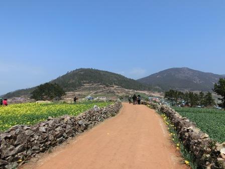 青山島の田舎道を歩くツアーメンバー
