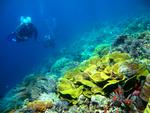 世界稀少価値有り!ブナケン島の広大な珊瑚