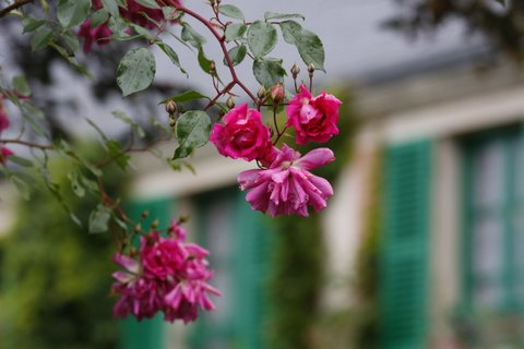 薔薇邸宅前