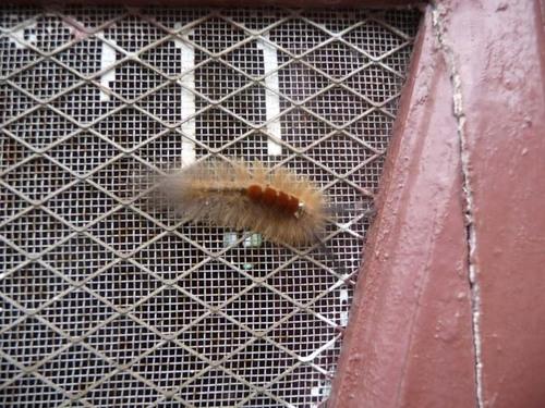 ブラシのような虫1