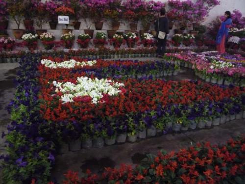 Flora Expo 3