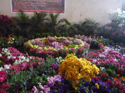 Flora Expo 4