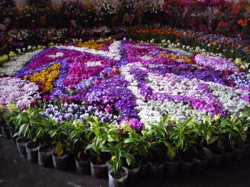 Flora Expo 5