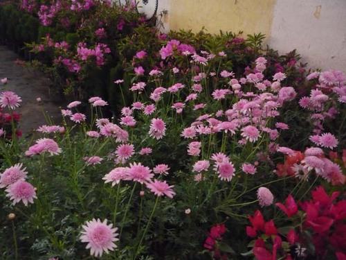 Flora Expo 7