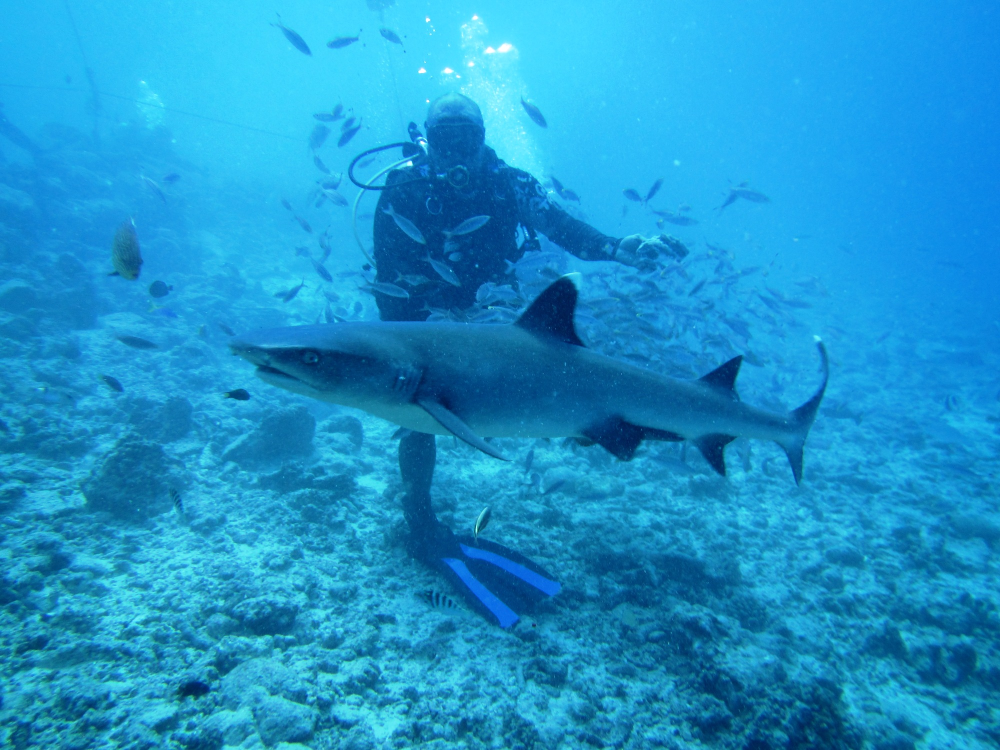 サメ フカヒレ