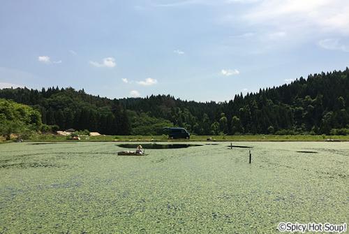 jyunsai_6
