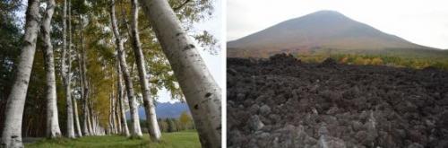 県民の森と焼走り