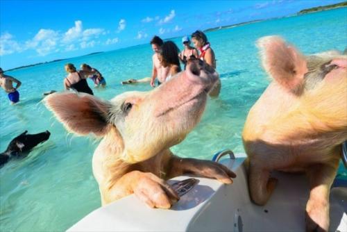 豚さんビーチ