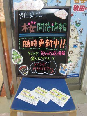 桜の企画展3