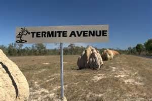 Termite Avenue