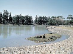 大泉が池3-2