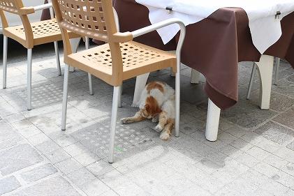 椅子の下のねこ