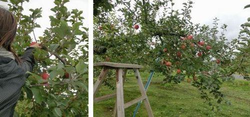 収穫体験2