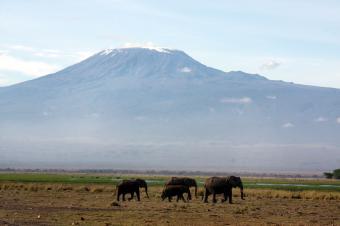キリマンジャロとアフリカゾウ