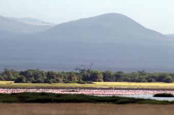 アンボセリのフラミンゴ