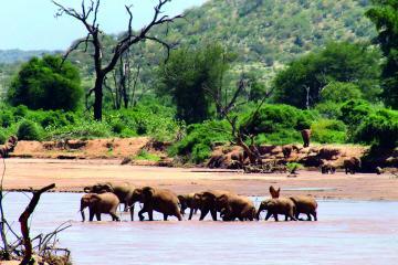 ゾウの群れの水浴び