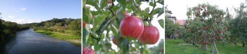 金田一りんご