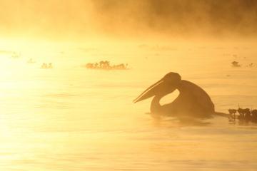 ナイバシャ湖ボートサファリ