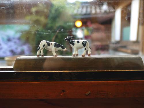 窓際にはなぜか小さな牛の兄弟(?)