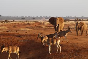 ツァボのダムに集まる動物