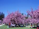 ソー公園お花見