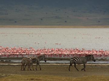 ンゴロンゴロのマガディ湖