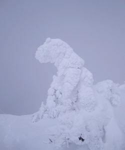 森吉山樹氷2