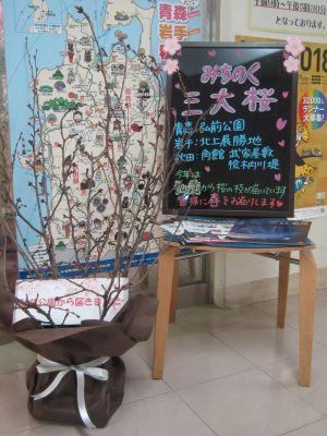 みちのく三大桜 展示風景