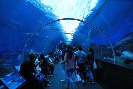 トンネル型水槽