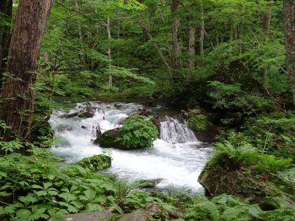 奥入瀬渓流5