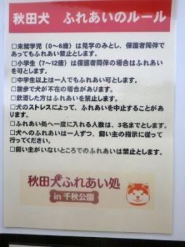 秋田犬ふれあい処2
