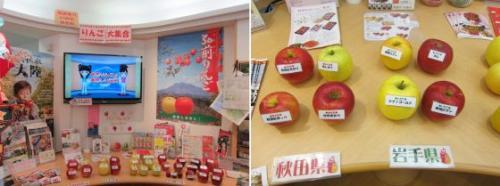 りんご展示