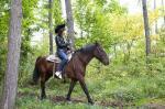 乗馬シーン