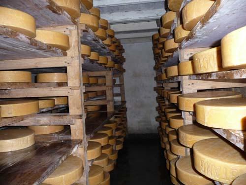 チーズ工場