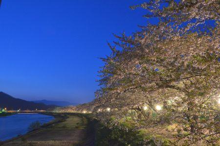 桧内川堤 夜桜