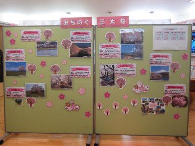 桜展示風景2019