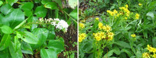 淀の松原 花