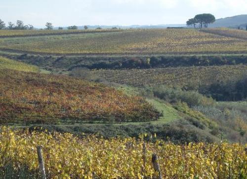 ウンブリア地方の葡萄畑
