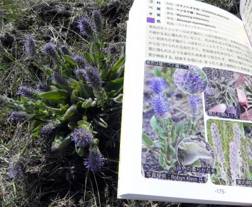 春の花発見!