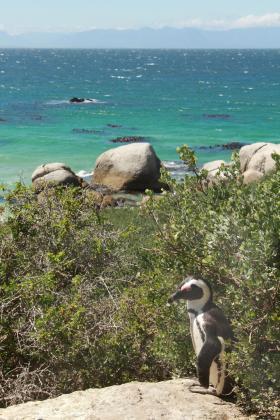 ボルダーズビーチペンギンコロニー