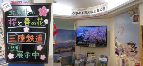 桜企画展1